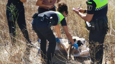La Policía de Albal rescata a un perro que había sido encerrado en un saco y abandonado