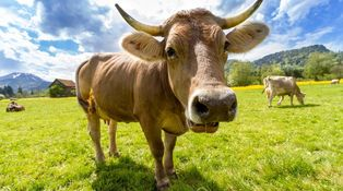 Después de siete años de vacas flacas... ¿Qué pasará en los mercados?