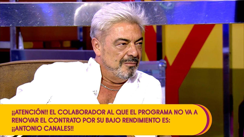 Antonio Canales, en 'Sálvame'. (Mediaset)