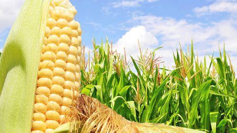 La única razón para odiar los OGM es la falta de información científica