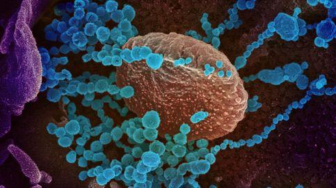 Científicos chinos creen haber hallado la segunda 'llave' de contagio del covid-19