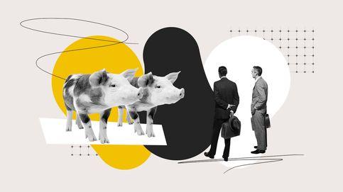 El Dato | ¿Hay más cerdos que personas en España?