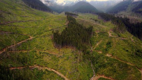 Restaurar los bosques genera grandes ganancias de carbono para el planeta