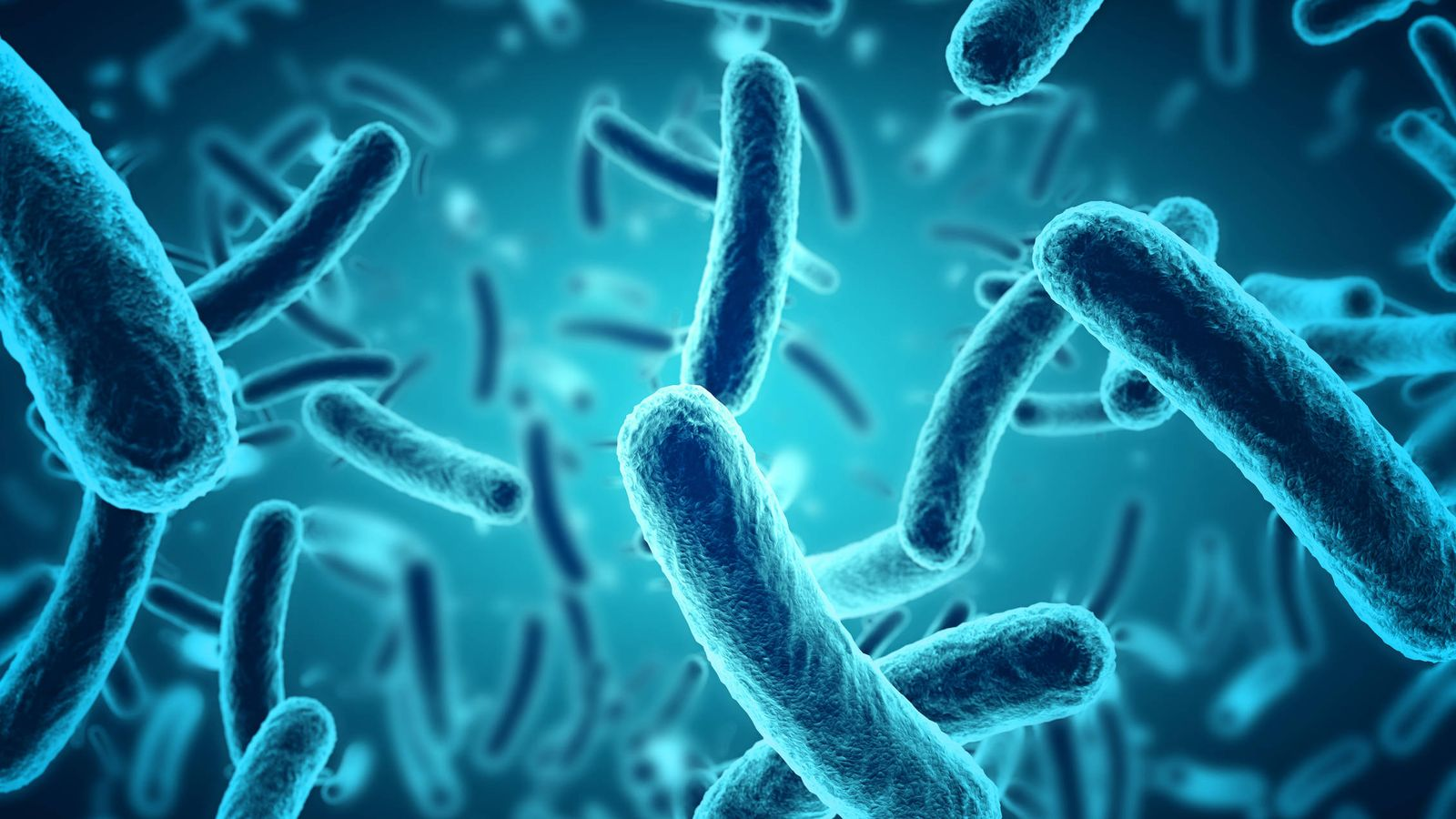 Foto: Bacterias dañinas. (iStock)