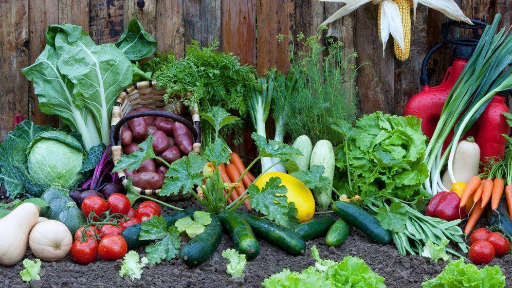Foto: Alimentos de la huerta. (iStock)