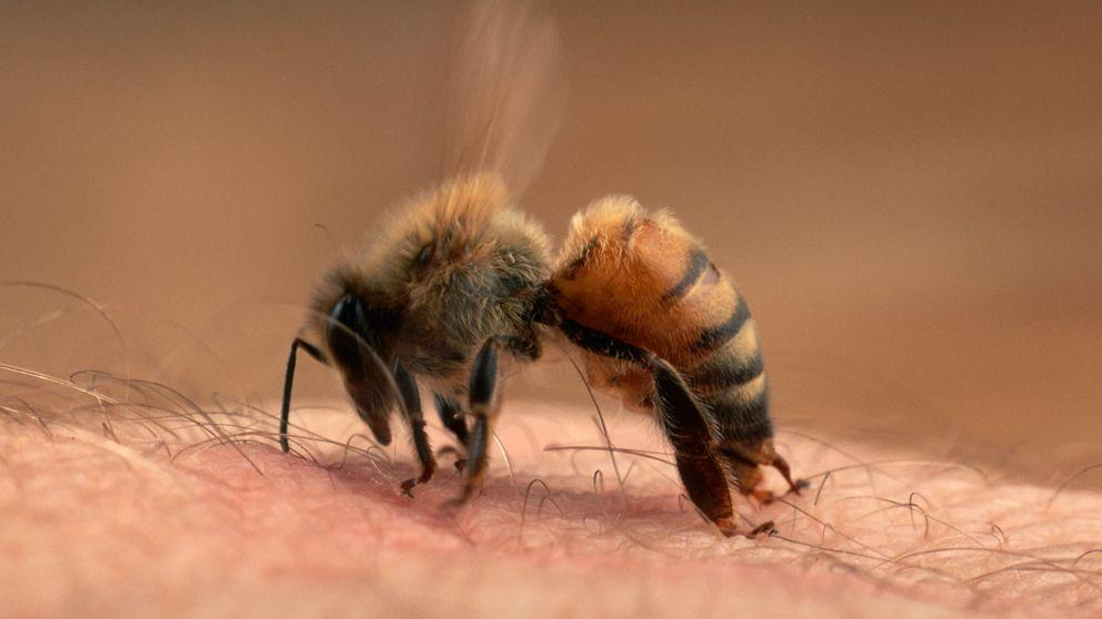 """El peor lugar en el que puede picarte una abeja (y no, no es """"ahí"""")"""