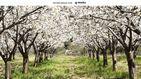 El lugar donde la fruta nace de un bosque de 'algodón'