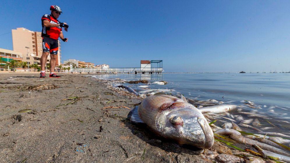 Foto: Peces muertos en la playa del Mar Menor (Murcia). Foto: FE Archivo Marcial Guillén