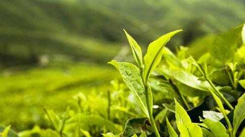 ¿Por qué las plantas son verdes? Este estudio desvela la razón