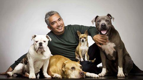 El 'encantador de perros', a juicio por las protectoras de animales