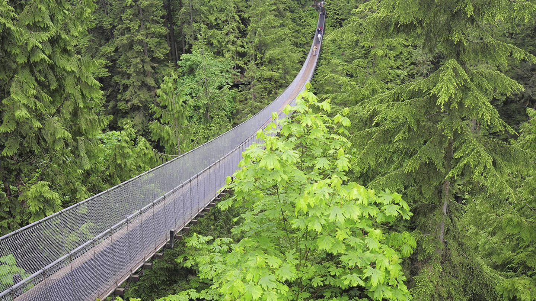 El puente sobre el río Capilano es el puente colgante peatonal más largo del mundo (iStock)