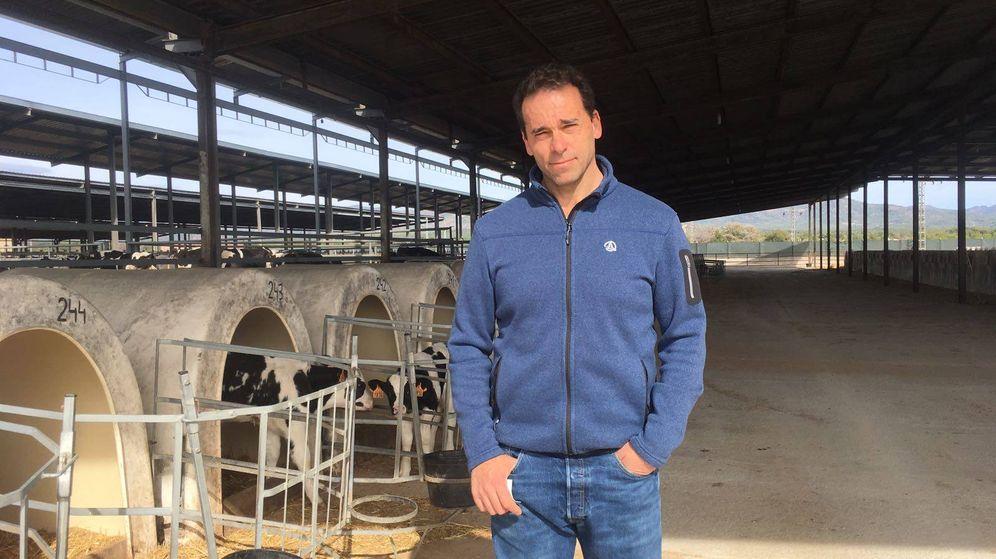 Foto: Ramón Morla regenta la granja de vacas More Holstein en Bétera. Detrás, los terneros. (Y. T.)