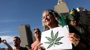 ¿Será la marihuana el próximo oro verde?