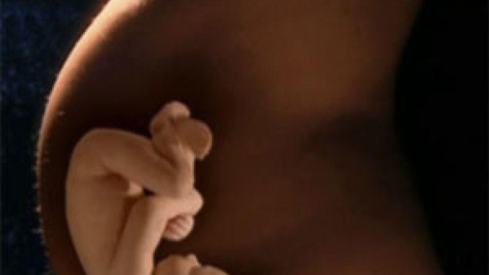 Un test de sangre materna mostraría enfermedades heredadas en el feto