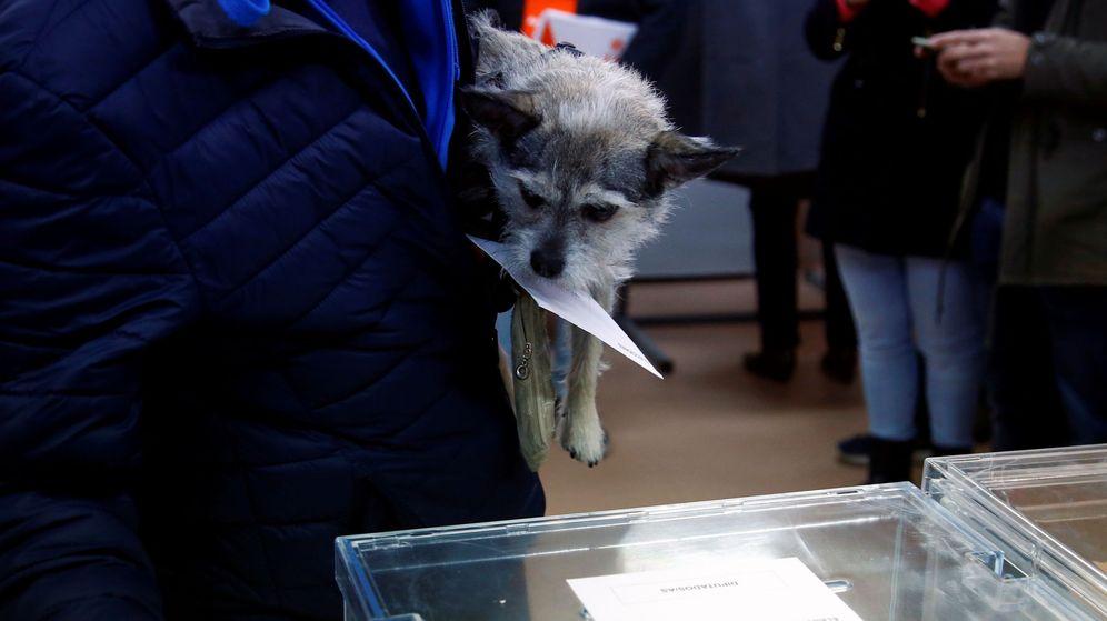 Foto: Un perro sostiene una papeleta durante las elecciones generales. (Reuters)