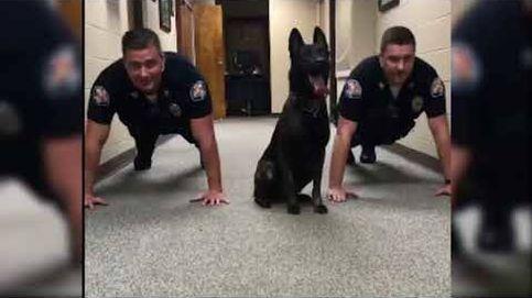 El vídeo viral de un perro policía haciendo flexiones