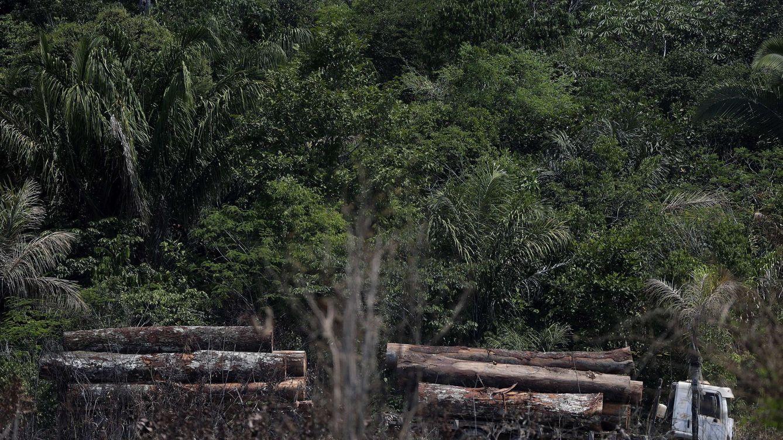 WWF: España es uno de los países europeos responsables de deforestar trópicos