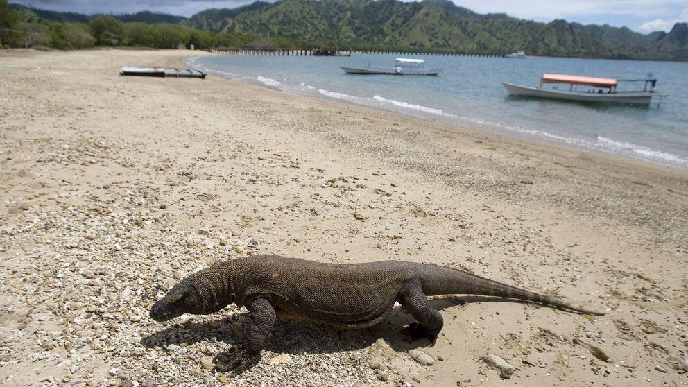 Parque Nacional de Komodo: dónde está, cuánto pesan los dragones y más