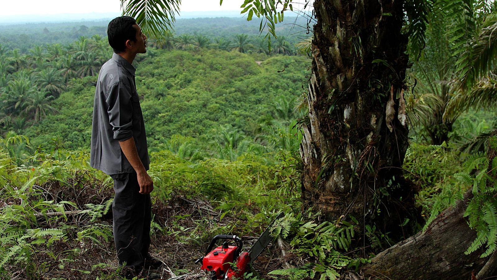 Foto: El 'ecoguerrero' Rudi Putra examina una de las palmeras en una plantación ilegal antes de cortarla. (L. Villadiego)