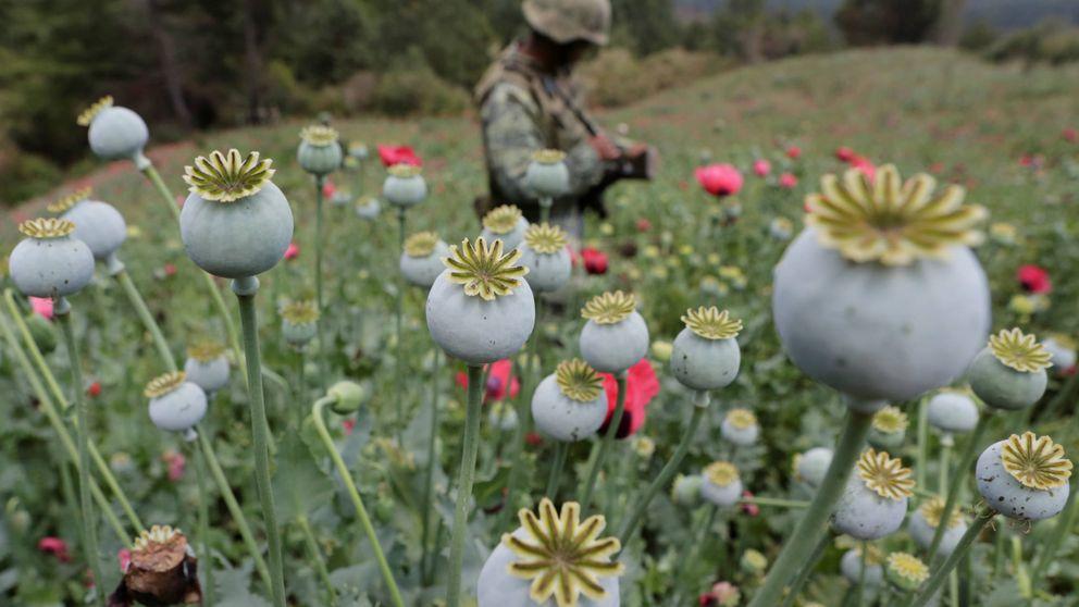 Así lucha México contra los cultivos de opiáceos