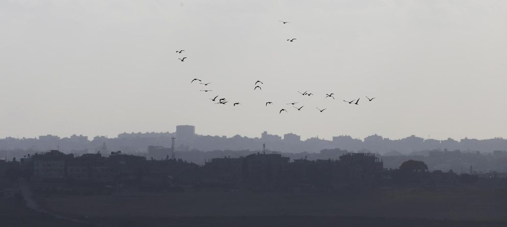 Foto: Un grupo de pájaros sobrevuela la Franja de Gaza. (Reuters)