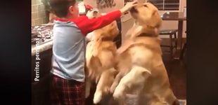 Post de Encarga a su hijo cuidar de los perros y se encuentra una escena adorable
