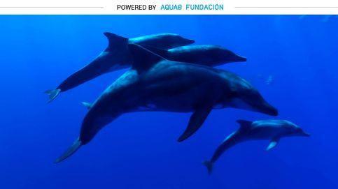 Esta es la especie más inteligente del mar: el delfín esteno