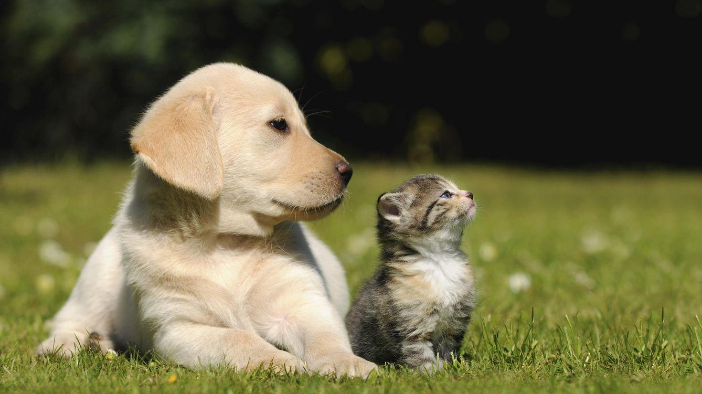 Foto: Aunque perros y gatos tuvieron sus más y sus menos en el pasado, ahora viven un apacible período de tregua. (iStock)