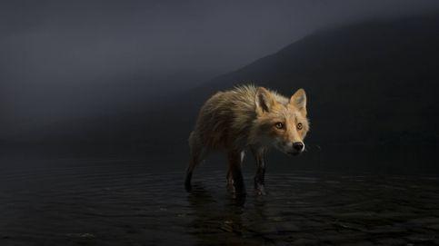 Imágenes candidatas al premio Wildlife Photographer 2021
