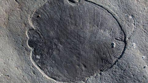 Dickinsonia, el animal más antiguo de la Tierra y el santo grial de la paleontología