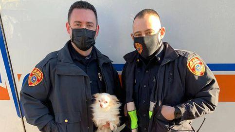 Dos policías se juegan la vida para salvar a un perro y un gato de un incendio en Nueva York