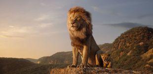 Post de Ni rey ni león: así sería la película de Disney si fuera fiel a la realidad