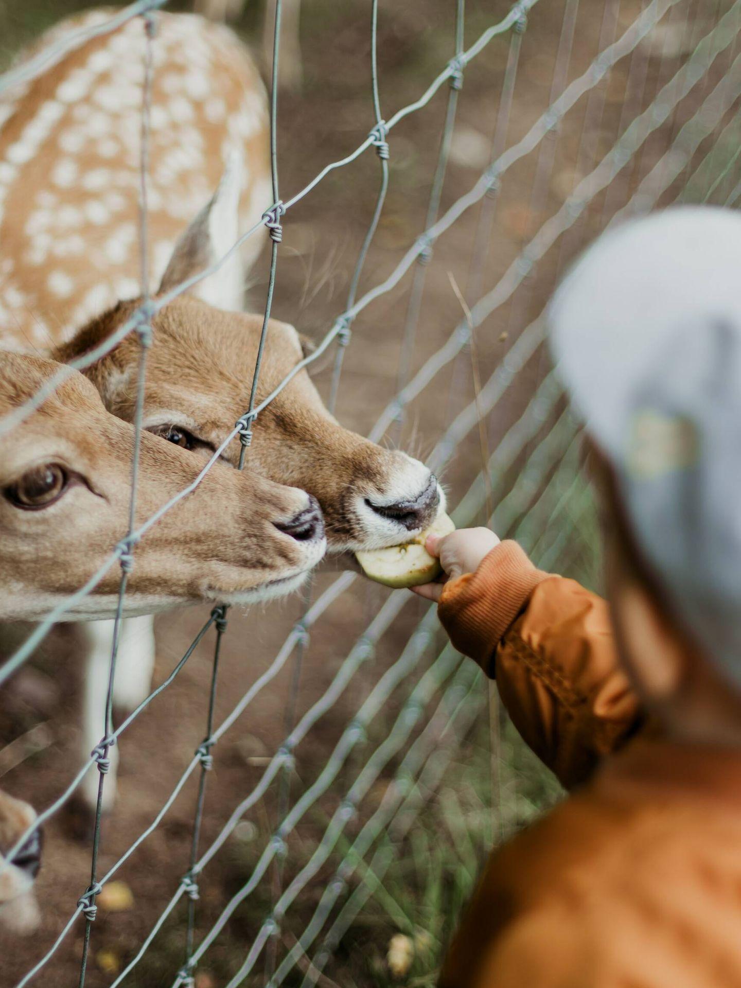Cualquier encuentro con un animal es un motivo de sorpresa y alegría a esta edad. (Unsplash)