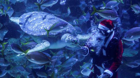Papá Noel visita un acuario en Kuala Lumpur y sube el precio del marisco: el día en fotos