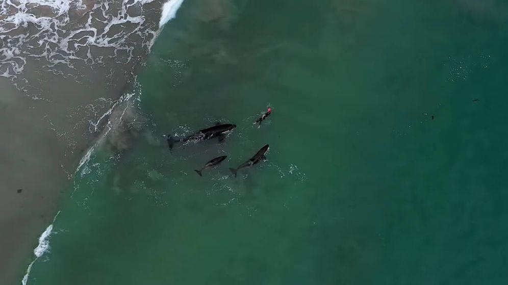 Foto: La nadadora neozelandesa, rodeada por las tres orcas (Foto: YouTube)