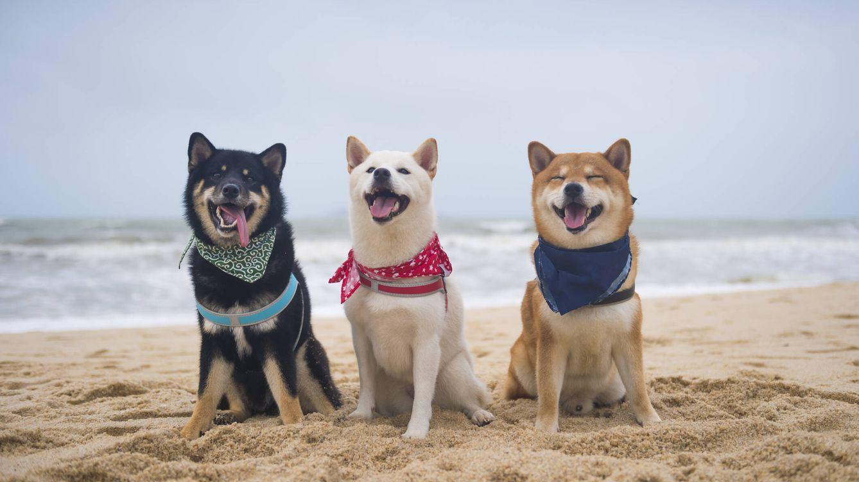 Las mejores playas para perros que puedes encontrar en Europa