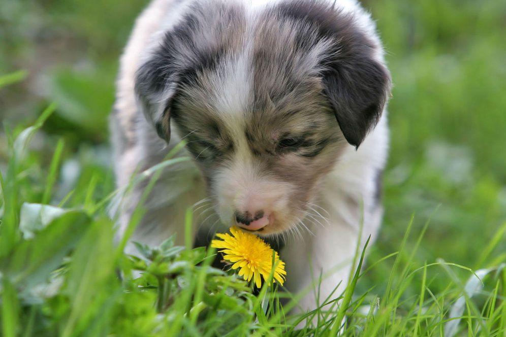 Foto: Cuando el olfato de los perros salva vidas (y atrapa ciberdelincuentes)