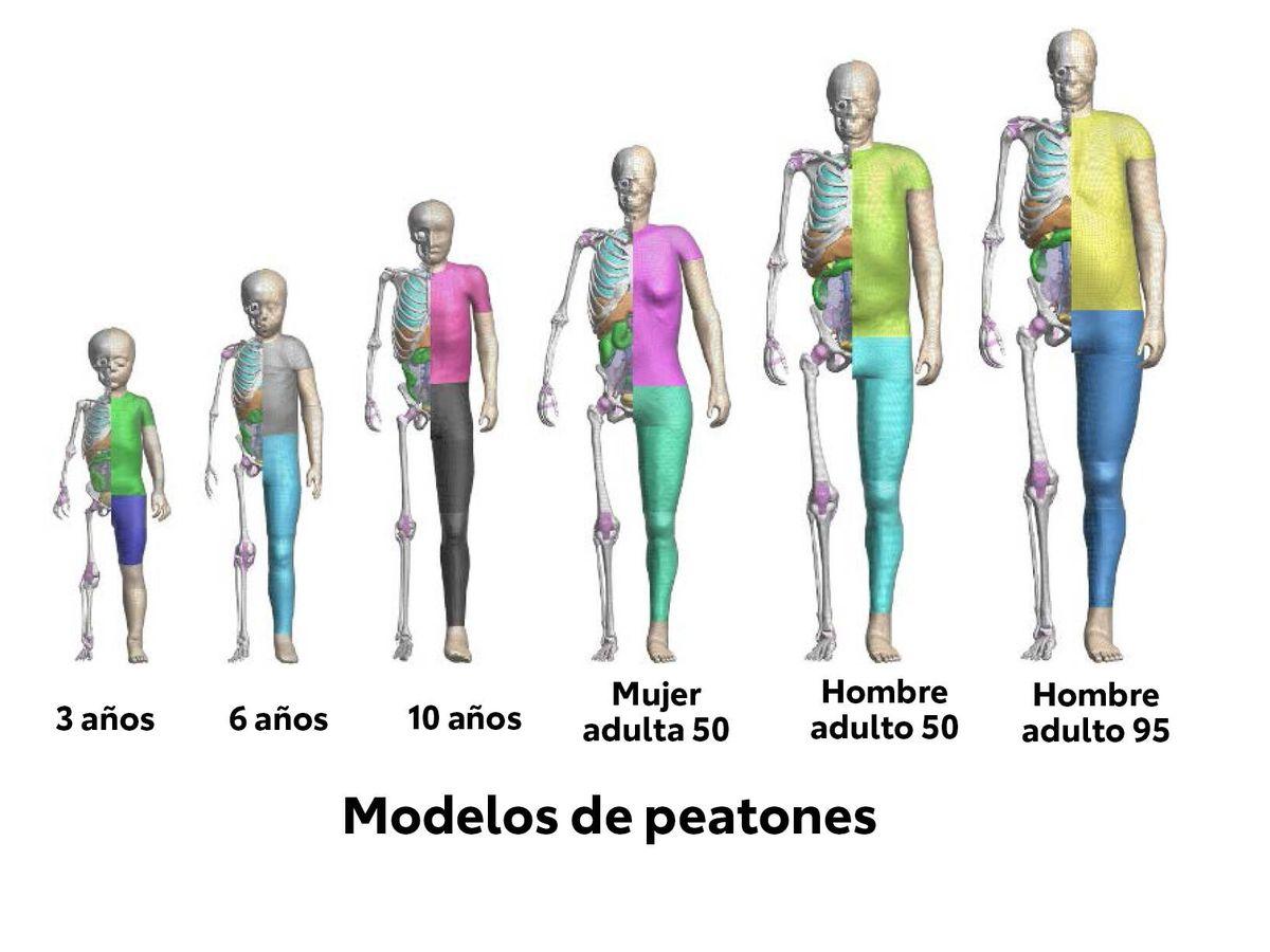 Foto: Los dummies, ya sean reales o virtuales, simulan personas de diferentes edades, sexos y complexiones.