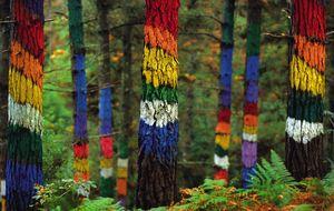 Bosques encantados para perderse