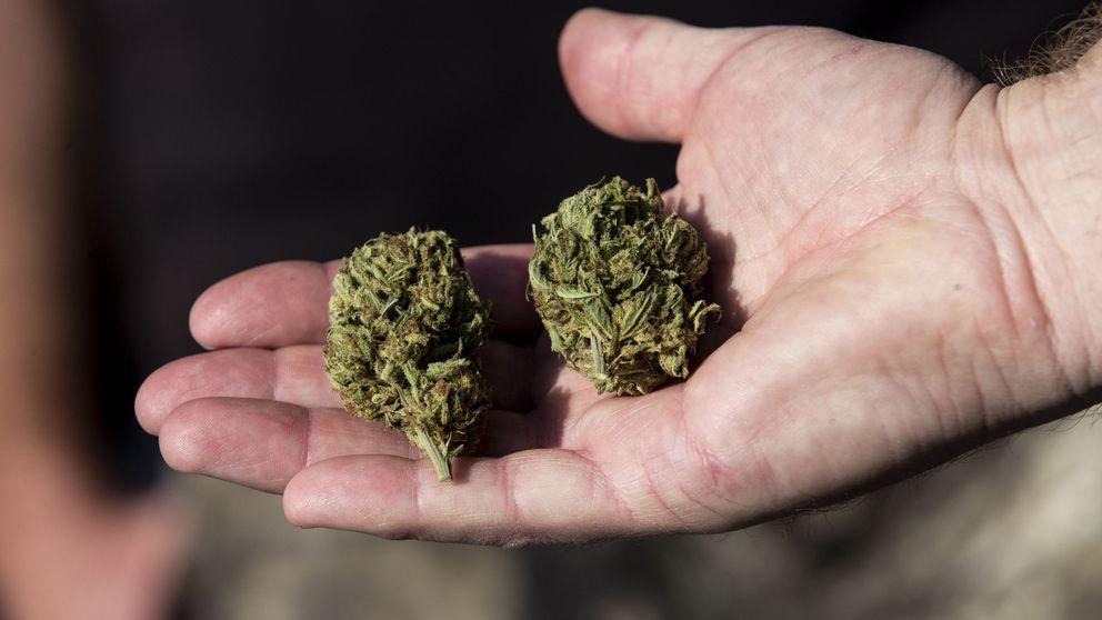 ¿Es la marihuana tan 'esencial' como la leche? En EEUU muchos creen que sí