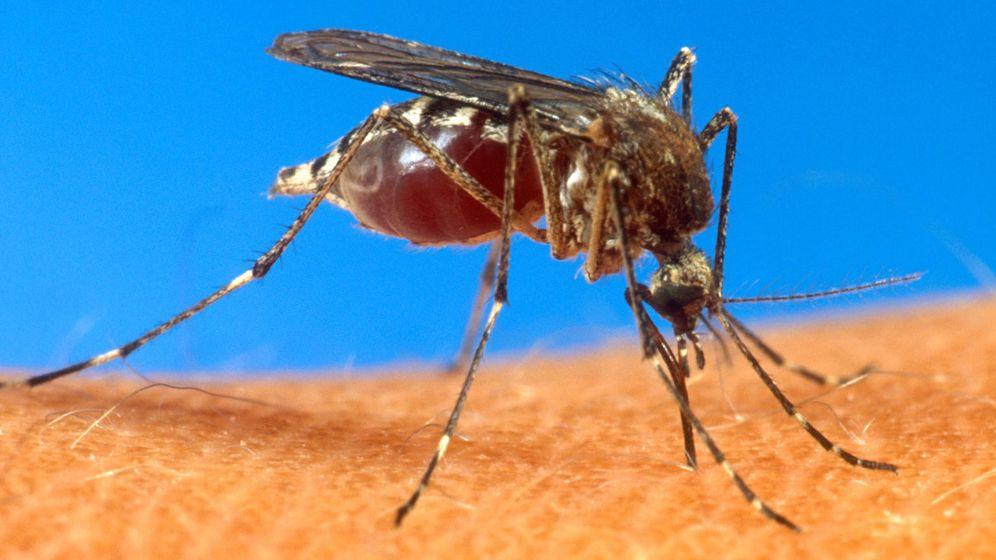 Foto: El olor corporal es el principal radar de los mosquitos para localizar a sus víctimas. (Gtres)