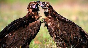 Los secretos de la biodiversidad española, en imágenes