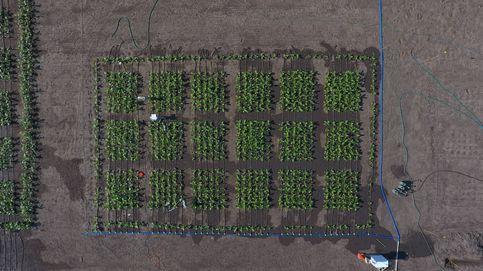 ¿Una nueva revolución agrícola a la vista? Logran incrementar las cosechas un 47%