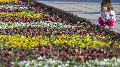 Alfombra de flores en Moldavia y enfrentamientos en Hebrón: el día en fotos