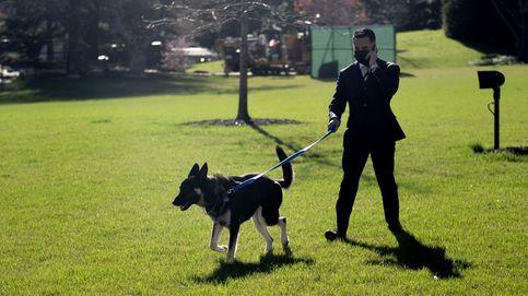Uno de los perros de Biden vuelve a morder a un trabajador en su regreso a la Casa Blanca