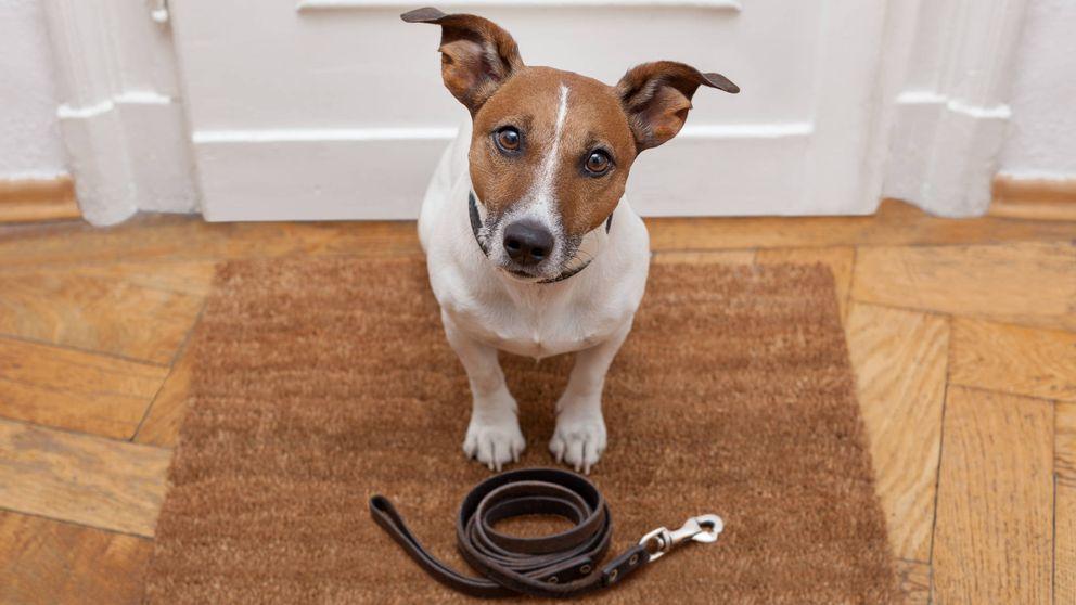 El gran beneficio para la salud de tener un perro como mascota
