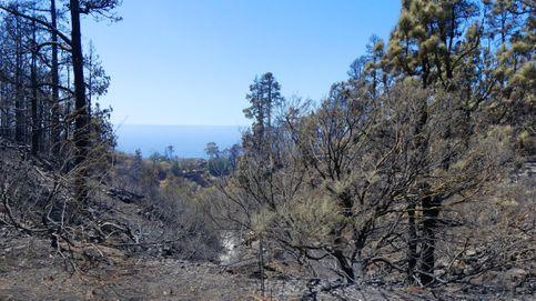 Investigan a un menor como autor del incendio de La Palma