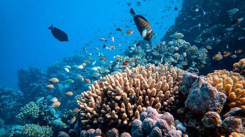 Hallan un enorme coral de 400 años en una remota zona de la Gran Barrera australiana