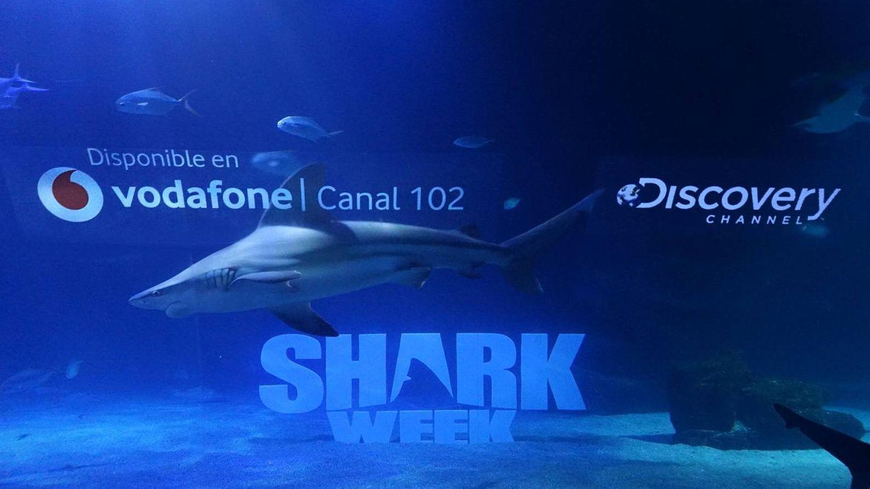 Imagen promocional 'Shark Week 2019'. (Discovery Channel)
