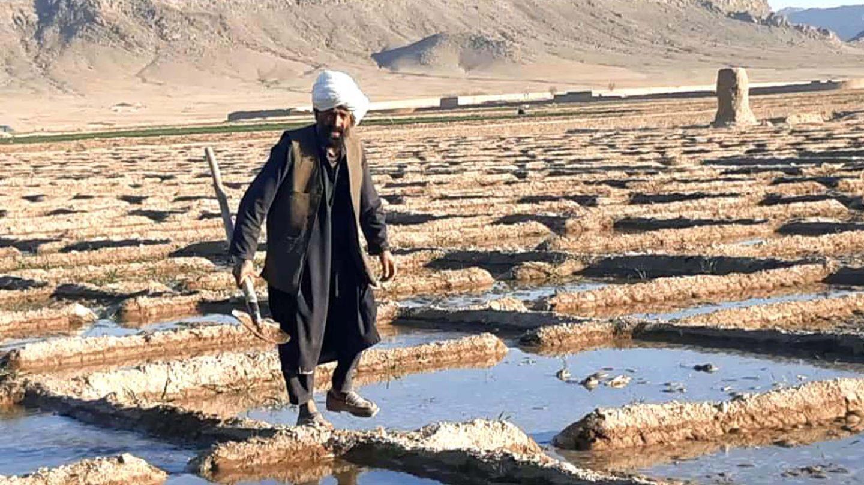 Afgano cultivando opio. (EFE)